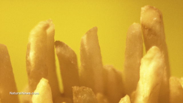 McDonald's french fries found to contain ingredients used in tank sealants, biodiesel