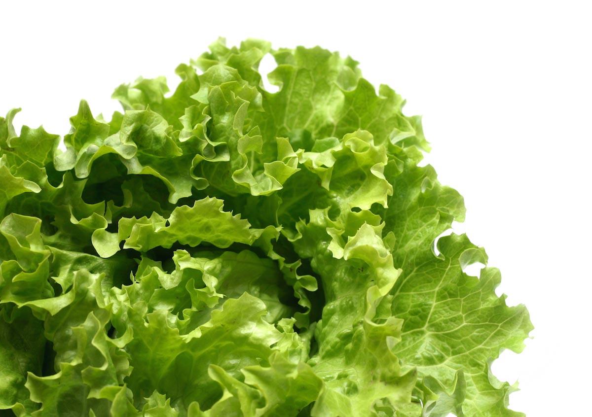 Grow bigger better crunchier lettuce for How to cut lettuce from garden