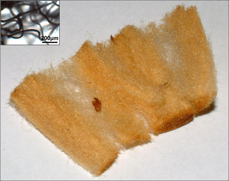 The Typical Cigarette Filter Is Made Of Glass Wool