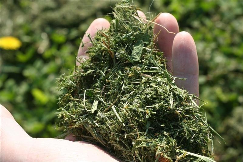 Make Natural Fertilizers For Plants