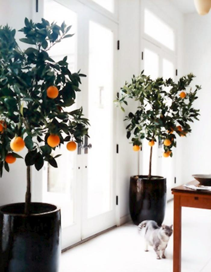 6 Sweet Delicious Fruits You Can Grow Indoors All Year Long