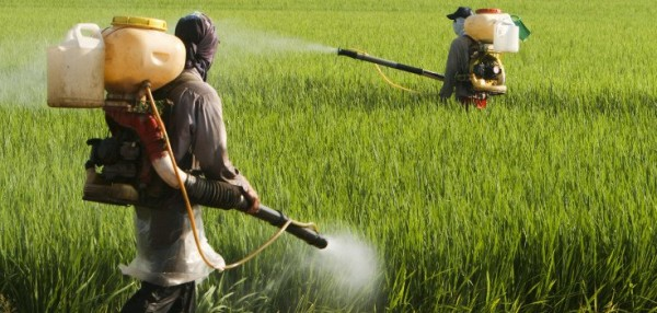 Secret documents: Monsanto knew about glyphosate-cancer link 35 years ago