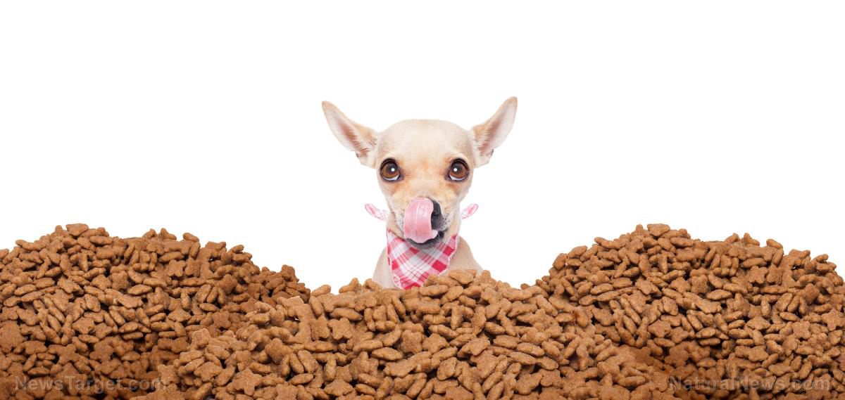 What To Feed A Dog Without Dog Food