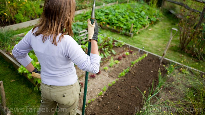 Harvest projections: How much do you need to plant if you want to feed your family for one year?